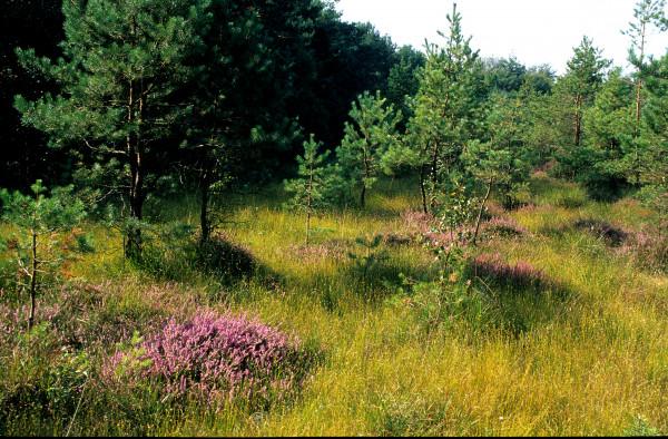 Blumenwiese - Bio - Haustee