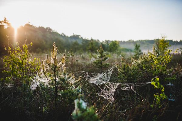 Kräutertee Frühjahr / Herbst - Bio - Haustee